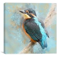 Kinfisher, Young Kingfisher, watercolour grunge sp, Canvas Print