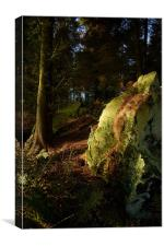 Green Reflection...Cullaloe Forest, nr Burntisland, Canvas Print