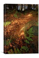 Follow the light...Cullaloe Forest, nr Burntisland, Canvas Print
