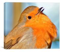 The Robin, Canvas Print
