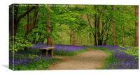 Bluebell Beauty, Canvas Print