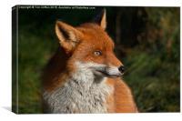 Foxy Lady, Canvas Print