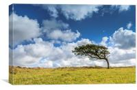 Prevailing Wind on Exmoor, Canvas Print