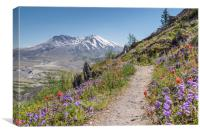 Mount St Helens , Canvas Print