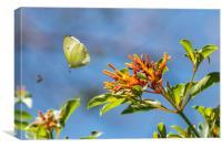 Butterfly in flight, Canvas Print