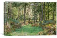 Woodland View, Canvas Print