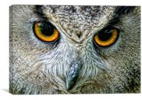 Eagle Owl Eyes, Canvas Print