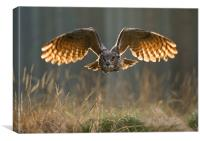 Eagle Owl , Canvas Print