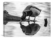 On reflection!, Canvas Print