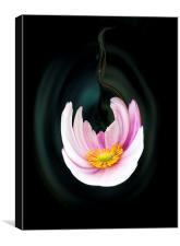 Japanese anemone flower, Canvas Print