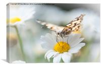 Painted Lady, Canvas Print