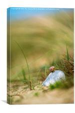 Snail on the Beach, Canvas Print