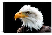 Regal Eagle, Canvas Print