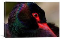 Shy Stork, Canvas Print
