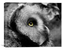 Moody Owl, Canvas Print