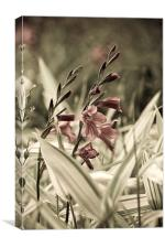 Aged Flowers, Canvas Print