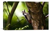 Great spotted woodpecker, Canvas Print