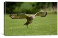 Owl, Canvas Print