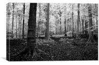 White woods, Canvas Print