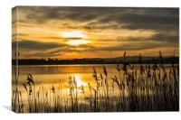 Golden Ponds, Canvas Print