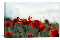 Lovely Poppies, Canvas Print