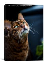 More tiger than moggy, Canvas Print