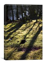 Moorhen in wooded moorland in evening light, Canvas Print