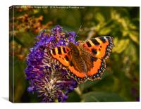 Small Tortoiseshell Butterfly ( Aglais urticae ), Canvas Print