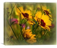 """""""COSMOS IN THE BREEZY WILDFLOWER MEADOW"""", Canvas Print"""