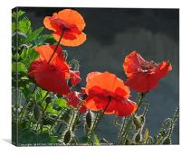"""""""BACK LIT RED  POPPIES """", Canvas Print"""