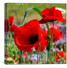 """""""PERFECT POPPIES"""", Canvas Print"""