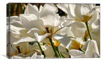 """White Tulips in the wind"", Canvas Print"