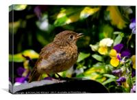 """Baby robin"", Canvas Print"