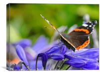 """Butterfly on Agapanthus"", Canvas Print"