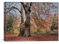 """Evening Light on the Autumn trees"", Canvas Print"