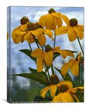 """Giant gold Rudbeckia"", Canvas Print"