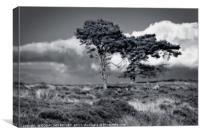 """""""Wuthering Heights"""", Canvas Print"""