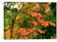 """""""Autumn branch in the light  dappled Wood"""", Canvas Print"""