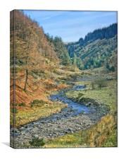 """Stream in Whinlatter Forest"", Canvas Print"