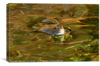 """Reflections of a Happy Frog"", Canvas Print"