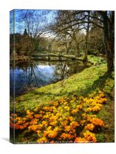 """Crocuses in Tree reflections"", Canvas Print"