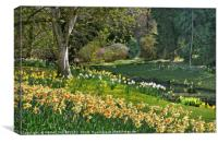 """Daffodils and Sunny days 2 "", Canvas Print"