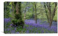 """Evening in a misty bluebell wood"", Canvas Print"