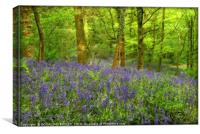 """Misty evening light in the bluebell wood"", Canvas Print"