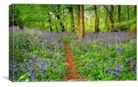 """Evening light in the bluebell wood 3"", Canvas Print"