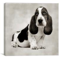 HANG DOG LOOK , Canvas Print