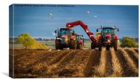 Turnip Harvest, Canvas Print