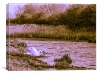 Swan on the Grantham Canal, Canvas Print