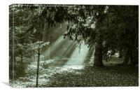 Woodland Sunrays Mono, Canvas Print