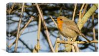Robin in the Trees (tight crop), Canvas Print